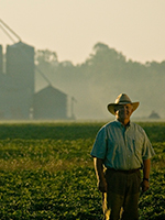 American peanut farmer in the fields